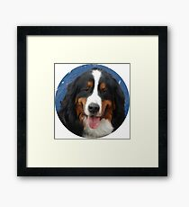 Bernese Mountain Dog with Mt of the Holy Cross Framed Print