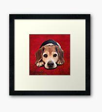 Beagle Portrait on a Red Background Framed Print