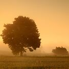 Misty Morning by James Coard