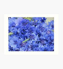 Our nationflower bluebottle Art Print