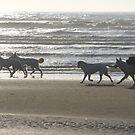 Dog walking service by shireengol