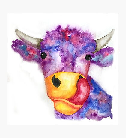 More than a pretty face...Lizzy cow Photographic Print