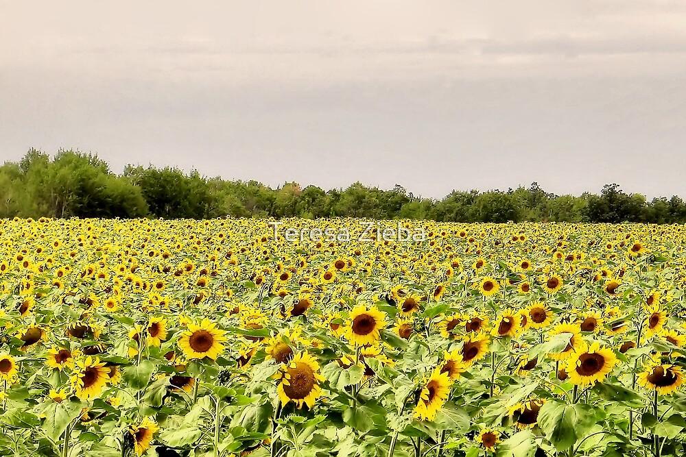 Sunflowers by Teresa Zieba