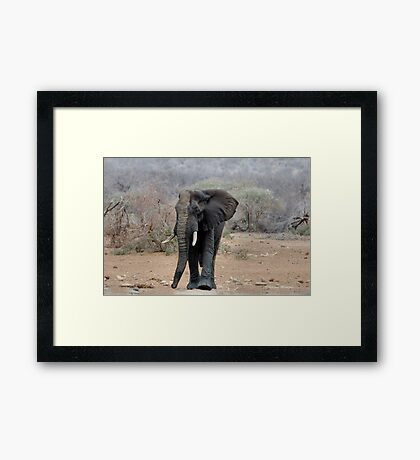 THE LONELY BUL -  THE AFRICAN ELEPHANT – Loxodonta africana Framed Print