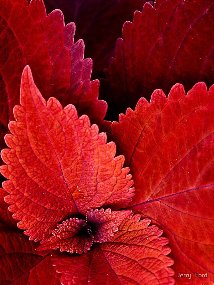 Serration in Red by Myron Watamaniuk