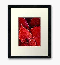 Serration in Red Framed Print