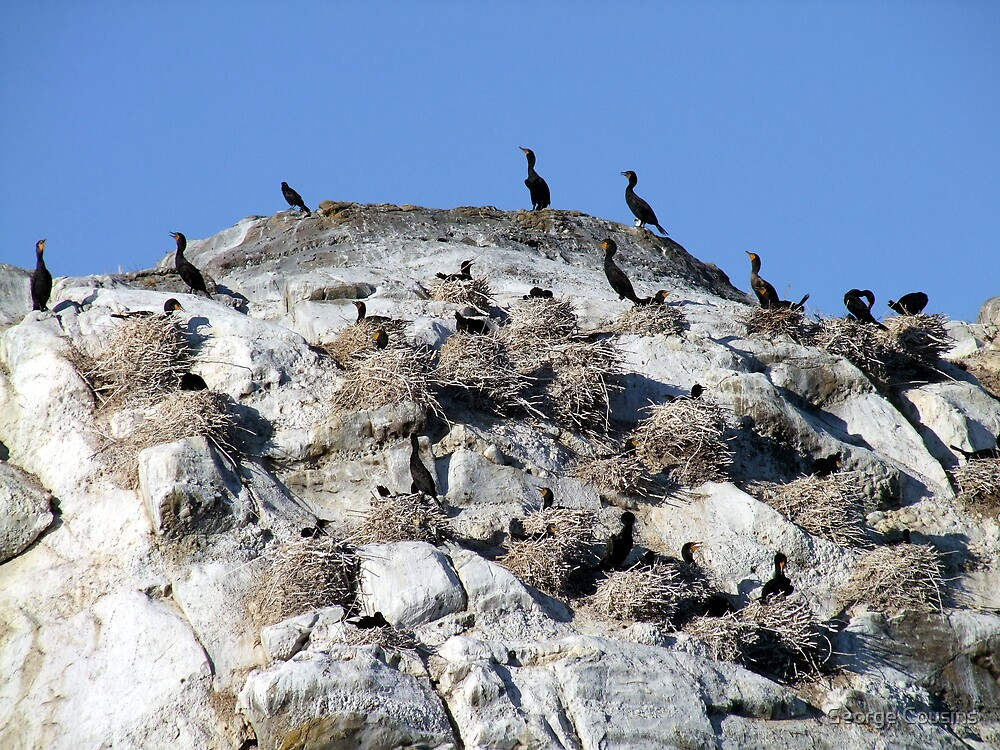 Our Nest,Our Rock,Our Home by George Cousins