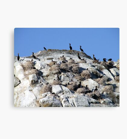 Our Nest,Our Rock,Our Home Canvas Print