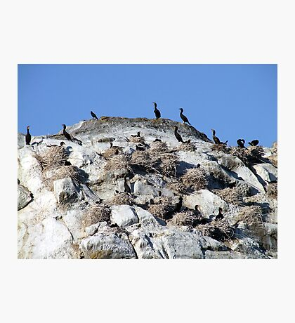 Our Nest,Our Rock,Our Home Photographic Print