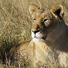 Lady lion  by Yolande van der Merwe