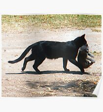 Mama Cat Transporting Young Poster