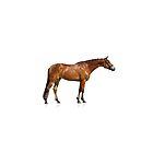 Reinrassiges Pferd, das getrennt steht von marusya1