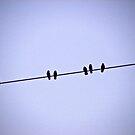 Birds on a String by IndigoMidnight
