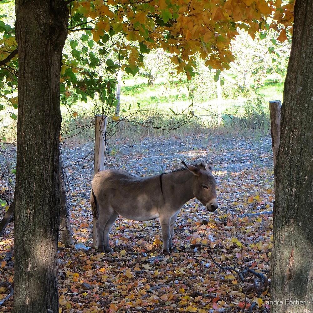 A Donkey's Tale by Sandra Fortier