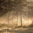 15.6.2018: Mist and Light in the Woods by Petri Volanen