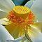 Flower in Macro (MACRO no snapshots)