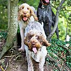 Spinoni And German Wirehaired Pointer Woodland Adventure by heidiannemorris