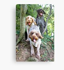 Spinoni And German Wirehaired Pointer Woodland Adventure Metal Print