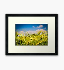 Spring in the fields of Italy Framed Print