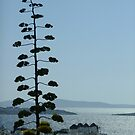 Lone tree and windmills on Mykonos by Themis