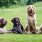 Spinoni And German Wirehaired Pointer Group Portrait by heidiannemorris