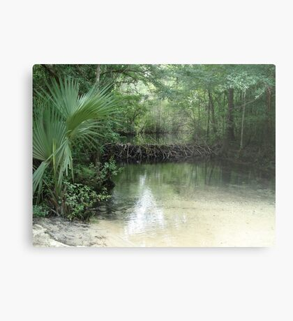 Beaver Dam and Pond on Econfina Creek Metal Print