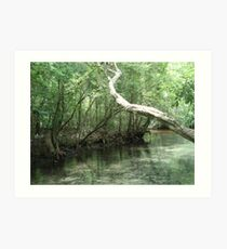 The Overhanging Branch Art Print