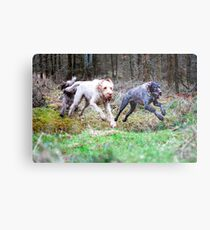 Galloping Through Woods Leaping Over Ditches Metal Print