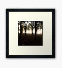 Alone in the forest Impression encadrée