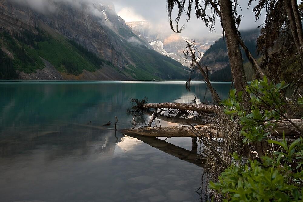 Alpine Jungle by Kevin  Kroeker