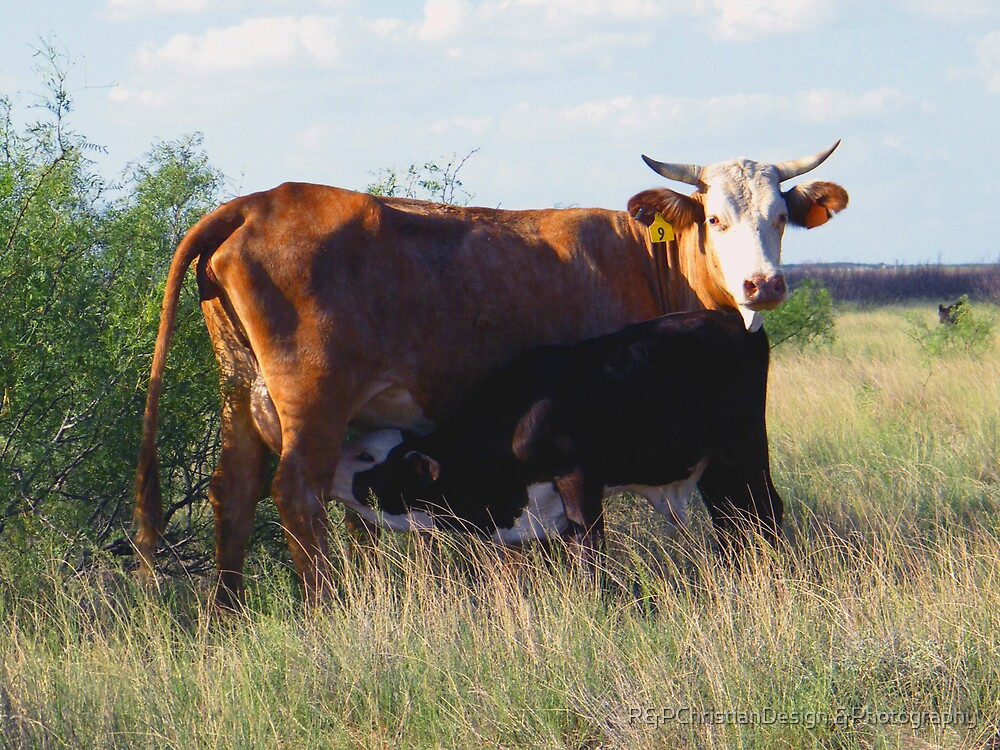 Mom And Calf by R&PChristianDesign &Photography