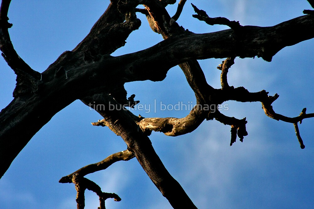 branch by tim buckley | bodhiimages