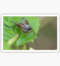 Robber fly Sticker
