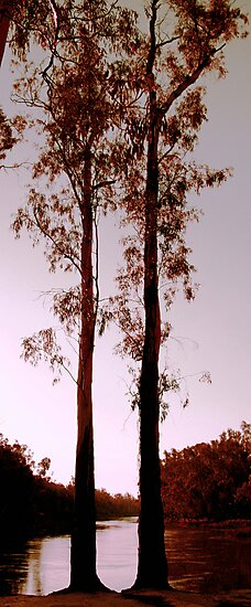 Two Souls - Trees on River Murray by liquidlines