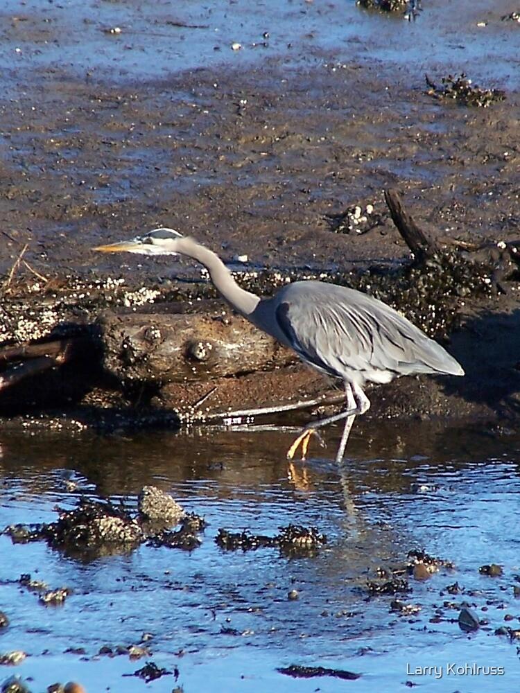 Great Blue Heron by Larry Kohlruss