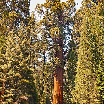 General Sherman Sequoia  - Sequoia National Park California by Buckwhite