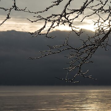 Cold Beauty - Ice Covered Branches at the Waterfront by GeorgiaM