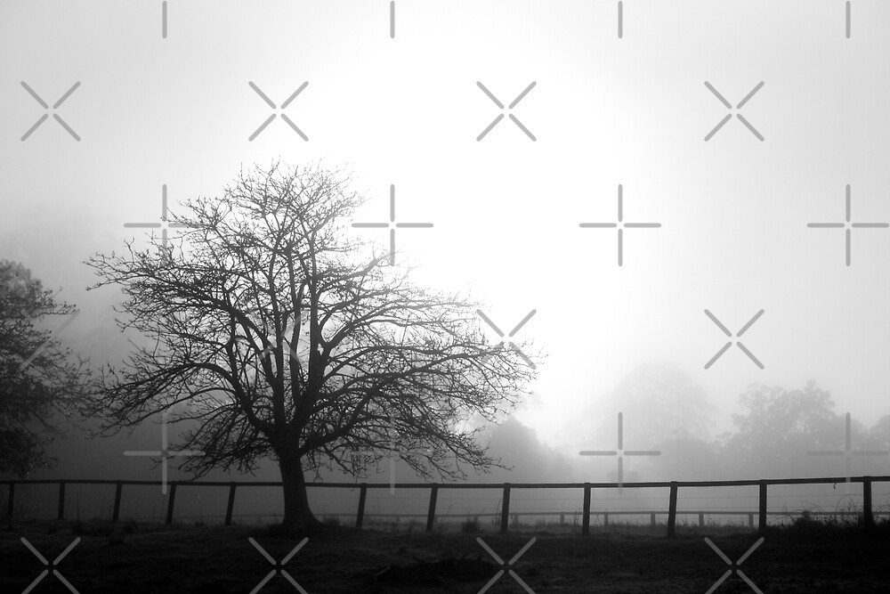 Misty Mountain Morning.... Isolated Tree by GritFX