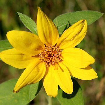 Yellow Wildflower by hummingbirds