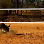 Kangaroo and the Limbo Bar by myraj