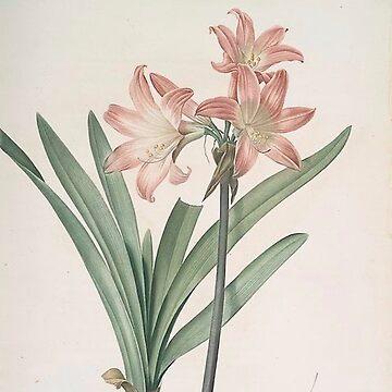 Vintage Plants - Amaryllis Belladonna by delennjadzia