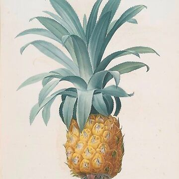 Vintage Plants - Pineapple by delennjadzia