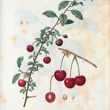 Vintage Plants - Cherries by delennjadzia