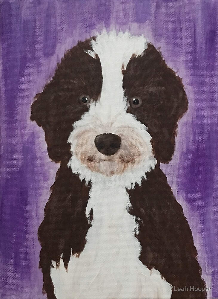 Aussiedoodle Puppy By Lkhooper Redbubble