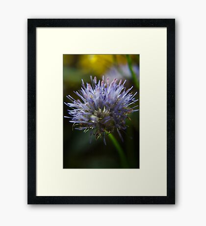 Light im my heart  (from wild flowers collection) Framed Print