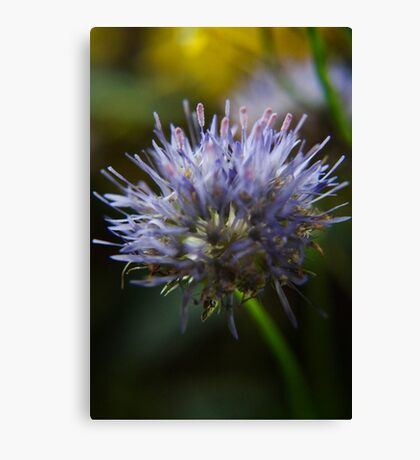 Light im my heart  (from wild flowers collection) Canvas Print