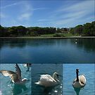 Swans and Geese Collage by EasterDaffodil