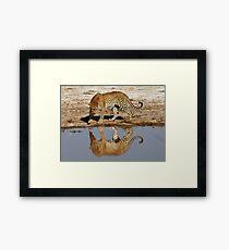 Leopard Reflection - Okavango Delta, Botswana Framed Print