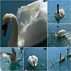 Water Birds Collage by VoxCeleste