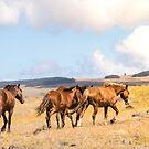 Easter Island Wild Horses by Ryan + Corinne Priest